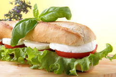 Sandwich with mozzarella and tomato Stock Image