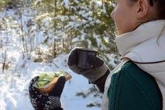 Sandwitch och kaffe för ung kvinna rånar hållande i vinterskog royaltyfri bild