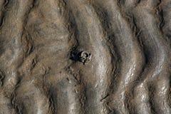 Sandworm modell Arkivbilder