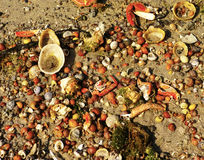 Sandy background with assorted shells and crabs Stock Photos