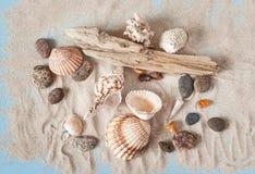 Sandy Background avec des trésors de mer Photo libre de droits