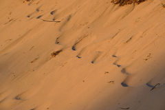 Sandy background at dunes Stock Photography