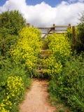 Sandy Bay - Devon Images libres de droits