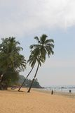 Sandy beach. With palms at Indian ocean, Goa Royalty Free Stock Images