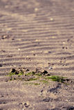 Sandy beach. Close-up on raw beach with signs of vegetation royalty free stock photos