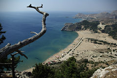Sandy Beach. Aerial panoramic view of sandy beach at sunny summer day with dry tree branch in foreground Stock Photo