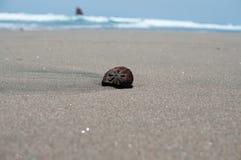 Sandy Beach Fotos de Stock Royalty Free