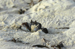 Sandy beach. A closeup view of the sand and things lying on a beach in the Seychelles stock images