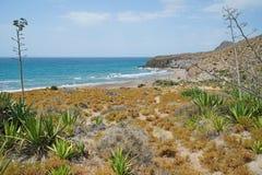 Sandy beach and agaves Cabo de Gata Almeria Spain. Sandy beach and agave plants in the Cabo de Gata-Níjar natural park, Playa del Barronal, Mediterranean sea royalty free stock image