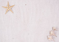 Sandy Beach Background. Sandy background with a starfish in the upper left-hand corner, and three conch shells in the lower right-hand corner Royalty Free Stock Photo