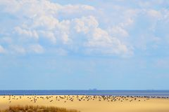 The Curonian spit. Baltic sea. Europe. Royalty Free Stock Images