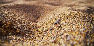 Sand beach background. Sandy beach background for summer. Sand texture. Macro shot. Copy space Stock Image