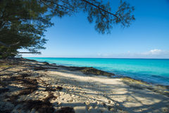 Sandy beach on Bimini framed with trees Stock Photo