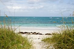 Sandy beach, blue water and cloudy blue sky. A path leading to sandy beach and turquoise blue water with sea grass in the foreground Stock Image