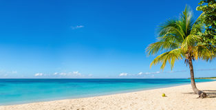 Sandy beach with coconut palm, Caribbean Island Royalty Free Stock Images