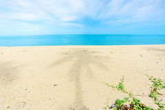 Sandy beach and coconut tree shadow Royalty Free Stock Photo