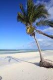 Sandy beach in Cuba. Cuba beach landscape - palm trees in Cayo Guillermo (Jardines del Rey Royalty Free Stock Photos