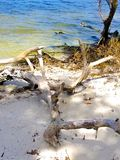 Drift Wood. Sandy beach drift wood in the park Royalty Free Stock Images