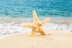 Sandy Beach Estrellas de mar en la playa Adultos jovenes Imagen de archivo libre de regalías