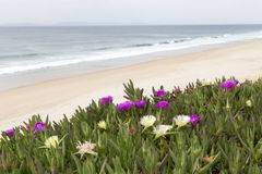 Sandy beach with flowers Stock Photography