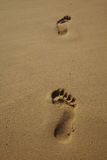 Sandy beach with footprints Stock Images