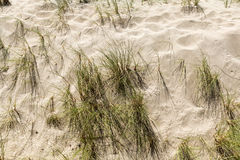 Sandy Beach With Grass Weeds Imagen de archivo libre de regalías