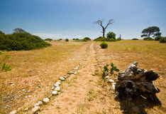 Sandy beach with green bushes and dry dead tree Stock Image