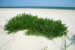 Sandy beach with green grass. In sunny day Royalty Free Stock Images