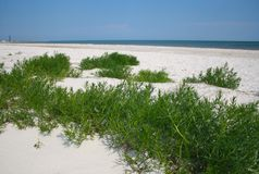 Sandy beach with green grass. In sunny day Stock Photo