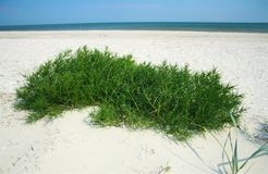 Sandy beach with green grass. In sunny day Royalty Free Stock Photos