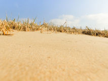 Sandy beach with industry on the other bank of the river . Grass Stock Photography