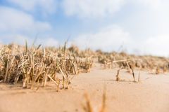 Sandy beach with industry on the other bank of the river . Grass Royalty Free Stock Photography