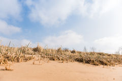 Sandy beach with industry on the other bank of the river . Grass Royalty Free Stock Image