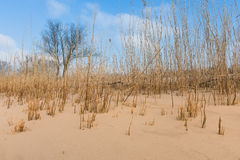 Sandy beach with industry on the other bank of the river . Grass Stock Images