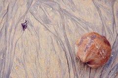 Sandy Beach - kokosnöt - vattenflödeslinje Arkivfoton