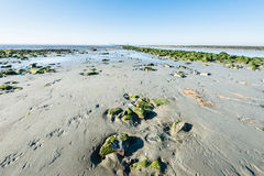 Sandy beach at low tide Stock Images