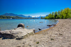 Sandy beach in Lucerne with lake, Pilatus mountain and Swiss Alps, Switzerland, Europe Stock Image