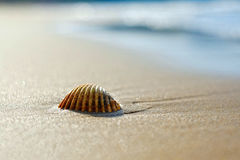 Sandy beach in the morning. And shell Stock Images