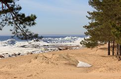 Sandy beach nine. Pines and bushes on sandy beach with snow stock photo