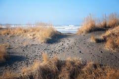 Sandy beach and ocean. Sand, grasses and the ocean o beach Stock Photography