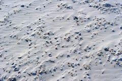 Sandy Beach och snäckskal Fotografering för Bildbyråer
