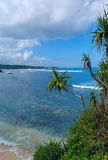 Sandy beach with palm on the island Royalty Free Stock Photos