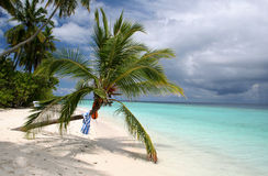 Sandy beach and palm tree royalty free stock photo
