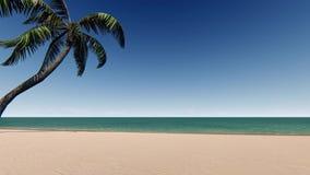 Sandy beach with palm tree and blue sky. Sandy beach with palm tree and clean blue sky stock video
