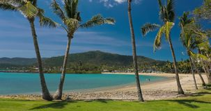 Sandy beach with palm trees, Airlie Beach, Whitsundays, Queensland Australia. Sunny day on sandy beach with palm trees, Airlie Beach, Whitsundays, Queensland stock video