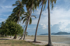 Sandy beach with palm trees on blue sky background with white clouds. Samui. Sandy beach with palm trees on blue sky background with white clouds Royalty Free Stock Images