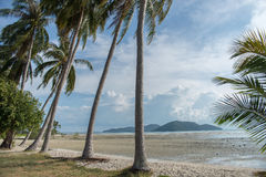 Sandy beach with palm trees on blue sky background with white clouds. Samui. Sandy beach with palm trees on blue sky background with white clouds Royalty Free Stock Image
