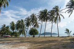 Sandy beach with palm trees on blue sky background with white clouds. Samui. Sandy beach with palm trees on blue sky background with white clouds Royalty Free Stock Photography
