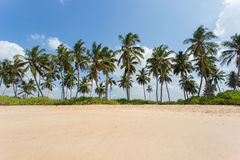 Sandy beach with palm trees Stock Photos