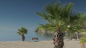 Sandy beach with palm trees and lonely bench in a summer morning. 4k. Bench under palm trees at the sandy coast with sea and beach safe guard tower near in a stock footage